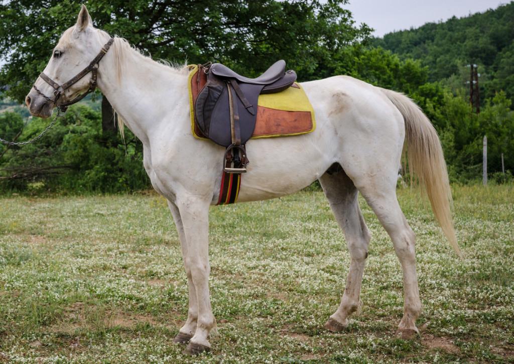 ivcho-horse
