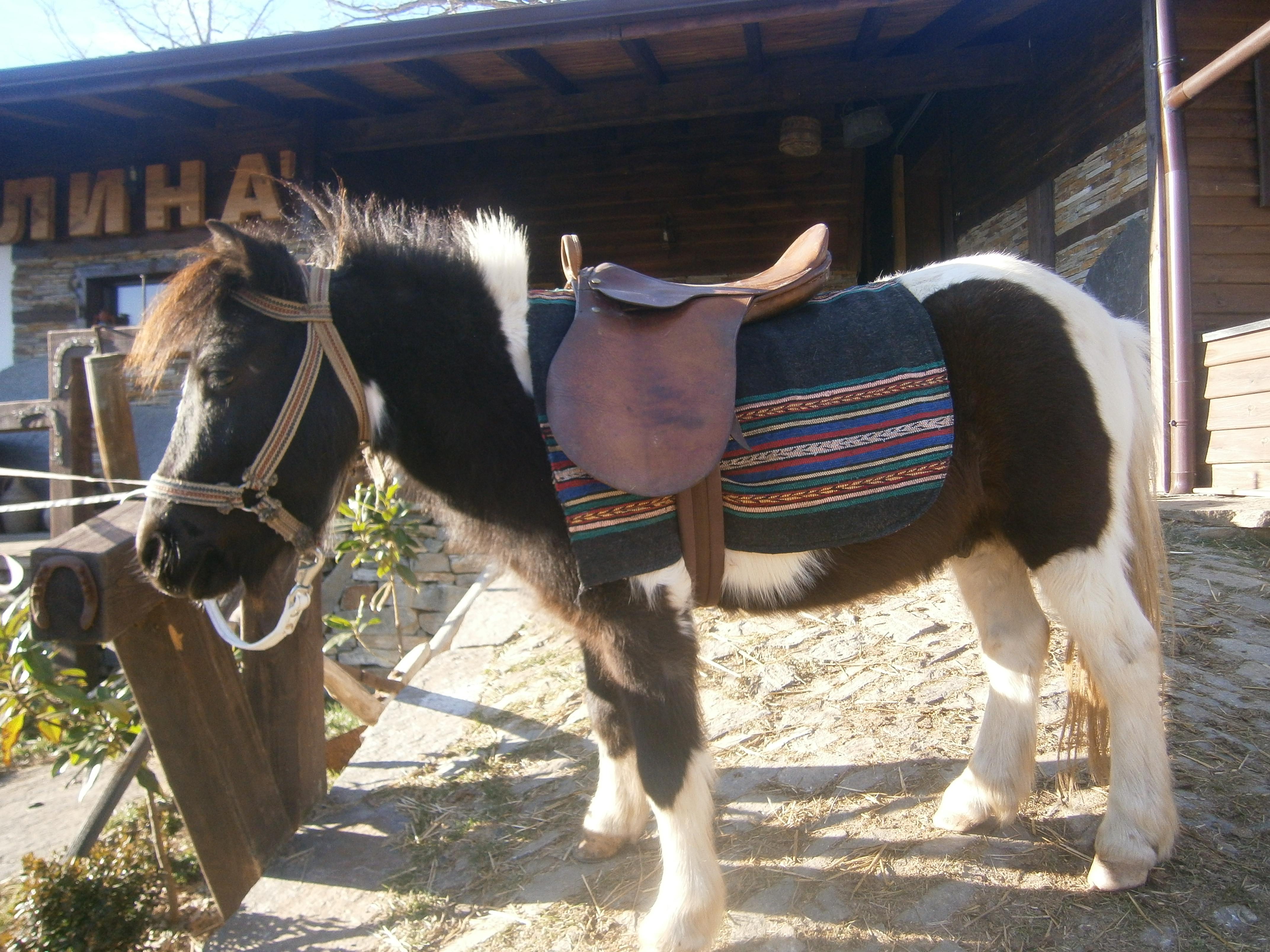 poni-horse